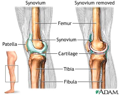 Image knee joint knee joint ccuart Image collections